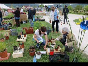 2017-04-22-Noidans-Troc-Plantes-4305