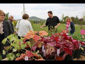 2017-04-22-Noidans-Troc-Plantes-4345